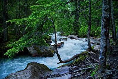 Avalanche Creek Art Print