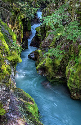 Photograph - Avalanche Creek Gorge by Morris McClung