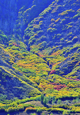 Photograph - Avalanche Of Fall Color In Glenwood Springs by Ray Mathis