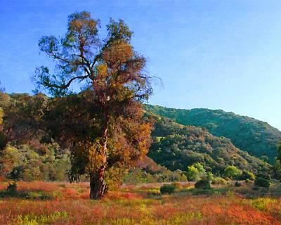 Photograph - Avalon Canyon Eucalyptus by Timothy Bulone