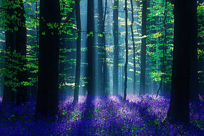 Bluebells Photograph - Avatar by Martin Podt