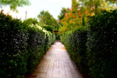 Photograph - Avenue Of Dreams 2 by Rodney Lee Williams
