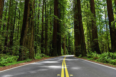 Photograph - Avenue Of Giants by Scott Cunningham