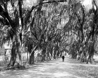 Audubon Park Photograph - Avenue Of Live Oaks, New Orleans Ca 1910  by Jon Neidert