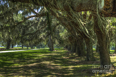 Avenue Of Oaks 2 Retreat Avenue St Simons Island Art Print by Reid Callaway