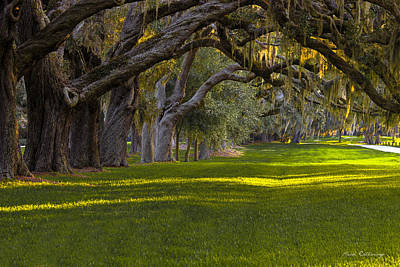 Avenue Of Oaks 2 St Simons Island Ga Art Print by Reid Callaway