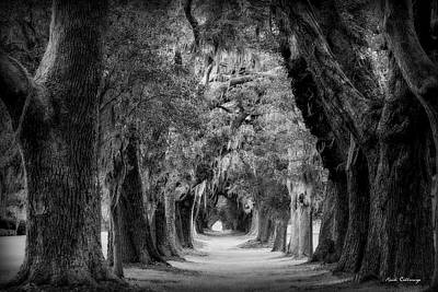 Photograph - Avenue Of Oaks B W St Simons Island Georgia Art by Reid Callaway