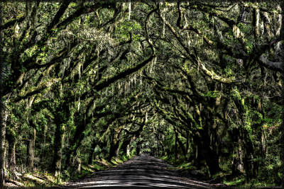 Photograph - Avenue Of Oaks by Erika Fawcett