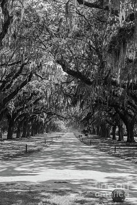 Photograph - Avenue Of Oaks Grayscale by Jennifer White