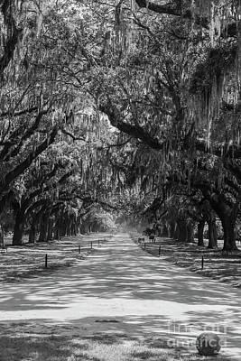 Photograph - Avenue Of Oaks Grayscale by Jennifer White