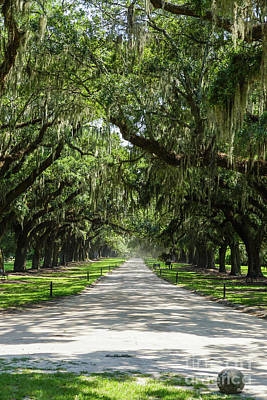 Photograph - Avenue Of Oaks by Jennifer White