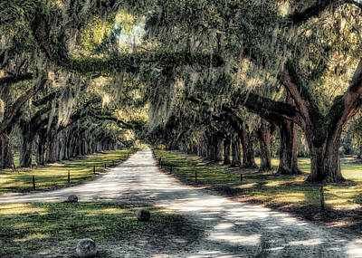 Photograph - Avenue Of Oaks by Jim Hill
