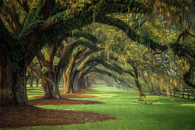 Avenue Of Oaks Art Print