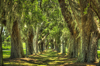 Photograph - Avenue Of Oaks Or Oak Alley St Simons Island Ga by Reid Callaway