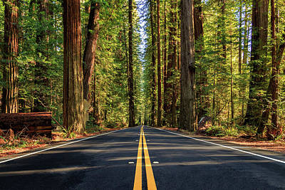 Avenue Of The Giants Art Print by James Eddy