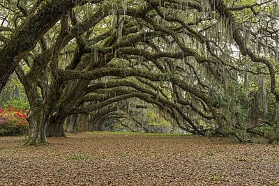 Photograph - Avenue Of The Oaks  Charleston Sc by Willie Harper