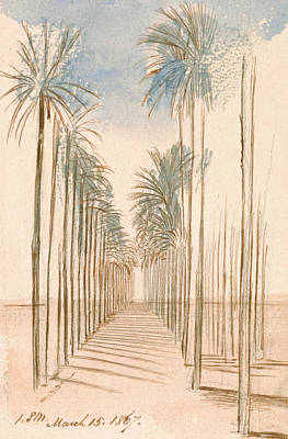 Drawing - Avenue Of Trees by Edward Lear