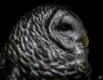 Photograph - Avery's Owls, No. 10 by Elie Wolf