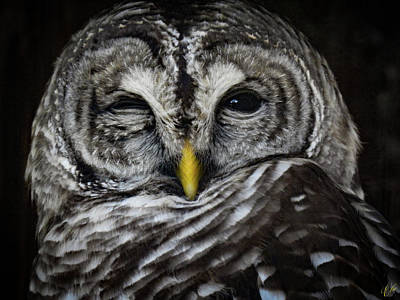 Photograph - Avery's Owls, No. 11 by Elie Wolf