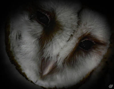 Photograph - Avery's Owls, No. 9 by Elie Wolf