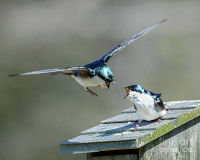 Photograph - Avian Air Traffic Control by Amy Porter