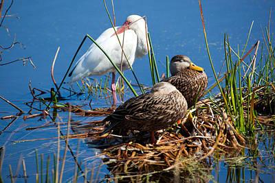 Photograph - Avian Siesta Time At Green Cay Boynton Beach Florida by Michelle Constantine
