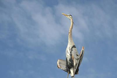 Photograph - Avian Yoga by Fraida Gutovich