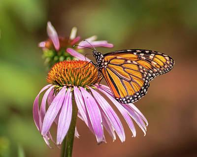 Photograph - Avid Gardener by Bill Pevlor