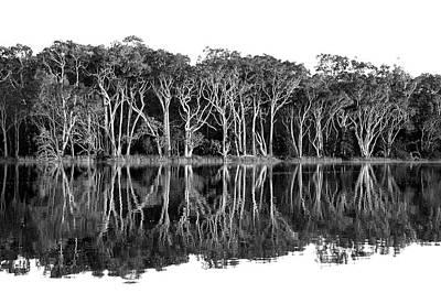 Photograph -  Avoca Lagoon by David Benson