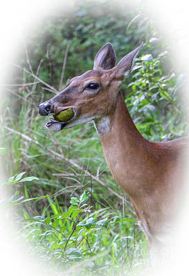 Photograph - Avocado Doe by Tom Claud