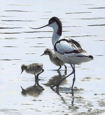 Painting - Avocet And Chicks by Clive Meredith