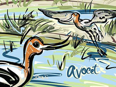 Avocet Art Print