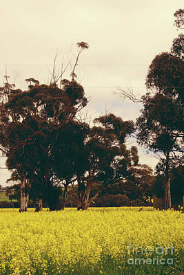 Photograph - Avon Valley Springtime by Cassandra Buckley