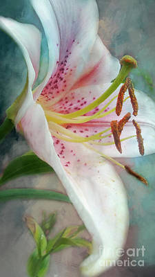 Photograph - Awaiting Lily by Janie Johnson