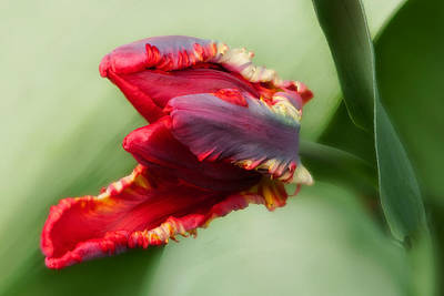 Digital Art - Awaken by JHR photo ART