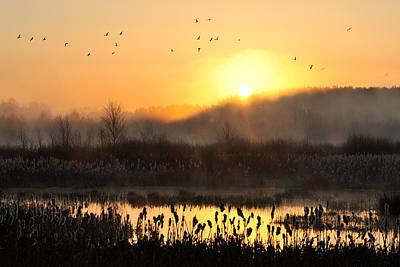 Swamp Photograph - Awakening by Przemyslaw Wielicki
