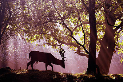 Awakenings -fallow Deer Art Print by Roeselien Raimond