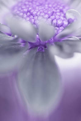 Awashed In Lavender Art Print