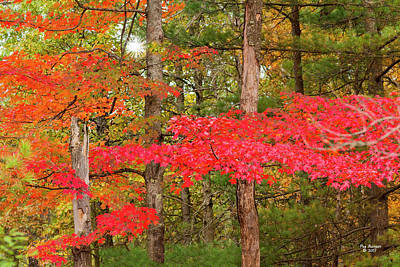 Photograph - Awesom Autumn by Peg Runyan