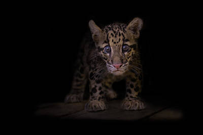 Feline Photograph - Awestruck by Ashley Vincent