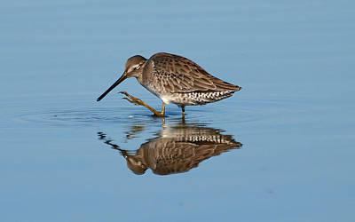 Rare Bird Sighting Photograph - Aww Shucks by Kala King