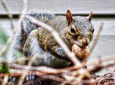 Photograph - Awww Nuts by Paul Wilford
