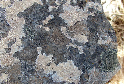 Photograph - Ax - Volcanic Rock Lichen by Robert Schaelike