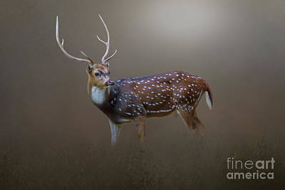 Photograph - Axis Deer by Marion Johnson