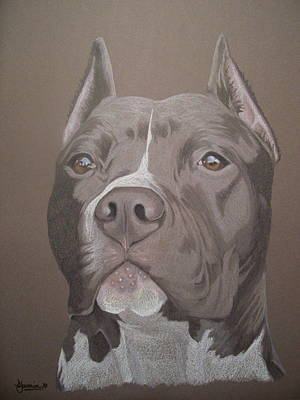 Pitbull Drawing - Axl by Stacey Jasmin