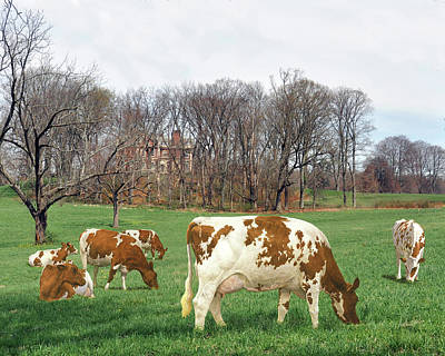 Mansion Digital Art - Ayrshire Cows 3rd by Anthony Forster