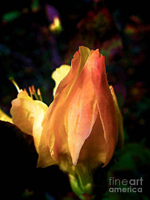 Photograph - Azalea Bud by Renee Trenholm