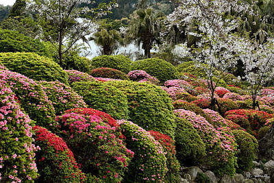 Photograph - Azalea Bush Garden by Joe Bonita