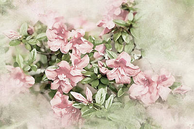 Photograph - Azalea Dreams by Kay Brewer