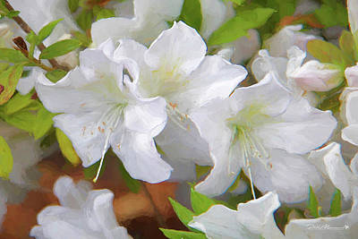 Photograph - Azalea Festival I by Phil Mancuso